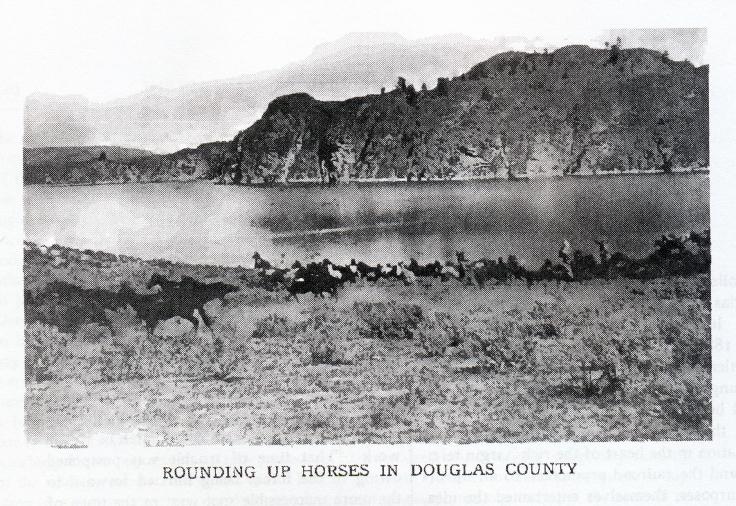 rounding up horses